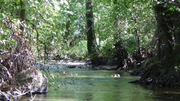 Krásn, no na teraz mŕtvy tok s brehovou vegetáciou jelší lepkavých a vŕb bielych a krehkých