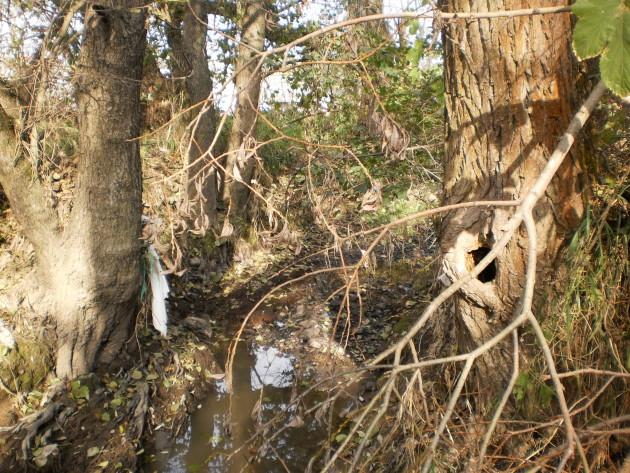 Bohužiaľ zničením 300 m Detvianskeho potoka s 2 populáciami druhov európskeho významu a prišlo k zničeniu biocentra s najvyššou biodiverzitou v katastri mesta Detva. Taktiež sa jednalo o veľkú časť zo zachovalého koryta dolného toku potoka s hlbočinami a podmitými brehmi, rôznymi substrátmi dna na vytieranie rýb.